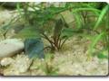 Mein Nano-Aquarium