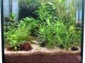 Mein Nano-Aquarium nach zwölf Wochen