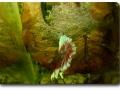 Markus Sauer - Zucht von Kampffischen