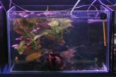 Aquaristik-Börse Scalare e.V - Becken