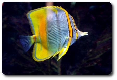 Aquaristik-Abteilung im Aquarium Berlin