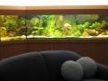 Martin Eberhardt - Tanganjikasee-Aquarium