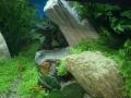 Aqua-Fisch 2008