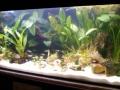 Schaubecken 05 - Neon-Fische Südamerika
