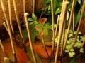 Schaubecken 14 - Naturaquarium mit Garnelen