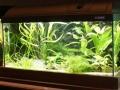 Schaubecken 17 - Kardinalfische Asien