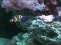 Schaubecken 29 - Meerwasser