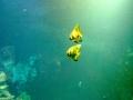 Meerwasser-Anlange