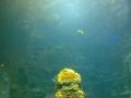 Größtes Becken der Meerwasser-Anlage