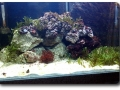 Einrichten eines Meerwasser-Aquariums