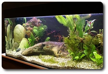 aquarium einrichten wurzeln steine aquarium einrichten. Black Bedroom Furniture Sets. Home Design Ideas