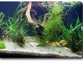 Wurzeln im Aquarium