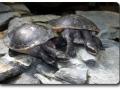 Aquarium Berlin - Schildkröten