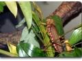 Aquarium Berlin - Insekten