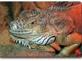 Aquarium Berlin - Leguane