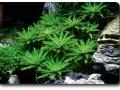 Pflanzen mit besonderer Struktur