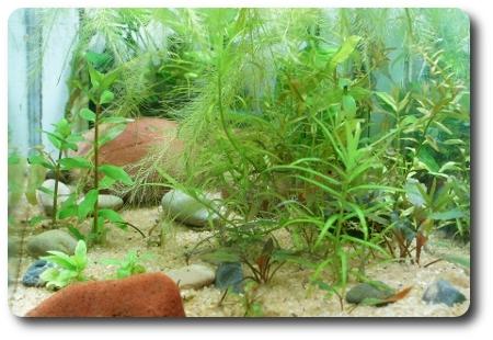 Haustierbedarf FleißIg Aquarium Komplett Fische & Aquarien