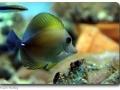 Seepferdchen und Meer (Visselhövede)