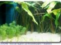Pflanzen und Schwimmraum