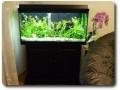Gesamtansicht von Violas Aquarium