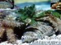 Wirbellose im Salzwasser Nano-Aquarium