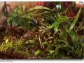 Wasserpflanzen (emers)