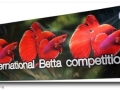 International Betta Competition