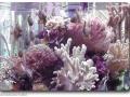 Salzwasseraquaristik