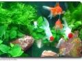 Kaltwasserfische