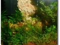 Kampffischbecken der Scalare Rosenheim