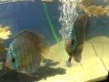 Aqua-Day 2015: Fische