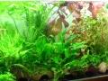 Aqua-Day 2015: Pflanzen