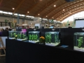 Aqua-Fisch 2015