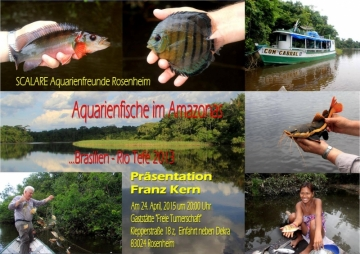 Aquarienfische im Amazonas - Franz Kern
