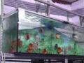Aquarium Schatzberger: Diskus