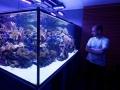 2500-Liter Südsee im Wohnzimmer