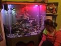 BeckenChecken: Das Eck-Aquarium