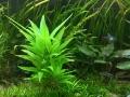 Becken-Checken (Lippert): Pflanzen