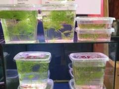 Aquaristik-Börse: Garnelen