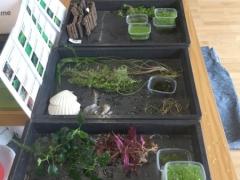 Aquaristik-Börse: Wasserpflanzen