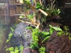 Aqua-Scaping beim Fressnapf