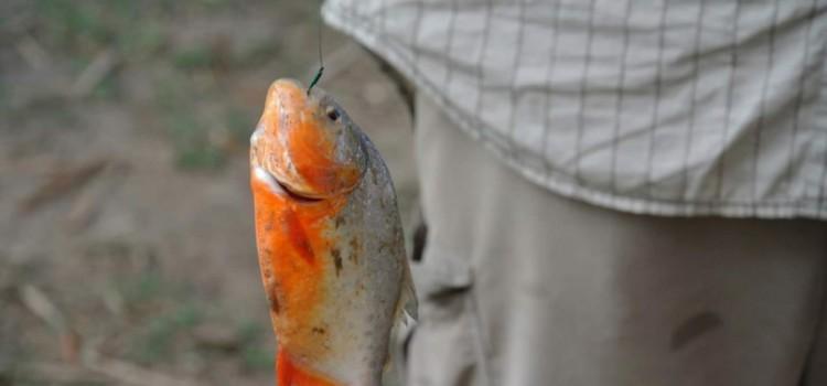 Fischfangreise Amazonas – Roman Lechner