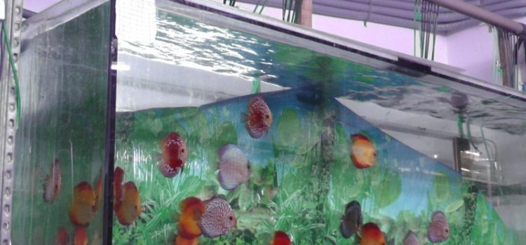 Vereinsausflug 2016 – Aquarium Schatzberger