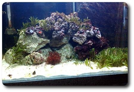 Einfahren eines Meerwasseraquariums