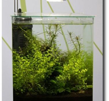 LED-Beleuchtung im Aquarium – Harro Hieronimus