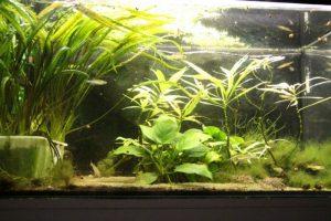 Umbau Aquarien-Abdeckung auf LED